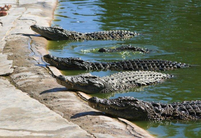 """一场关于""""鳄鱼蛋""""的法律纠纷:Prada 向美国鳄鱼皮供应商 Capo-USA 索赔"""